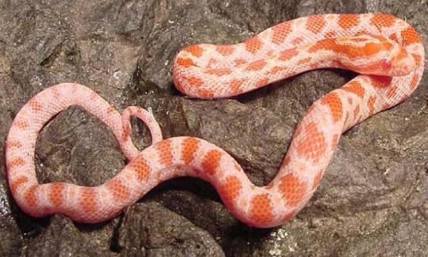 蛇冬眠时间-想买一条宠物蛇 谁知道哪里有卖